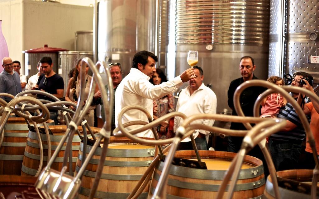 Mostos de colora turbio y aroma intenso. El Chardonnay del base cava, una delicia para los sentidos.