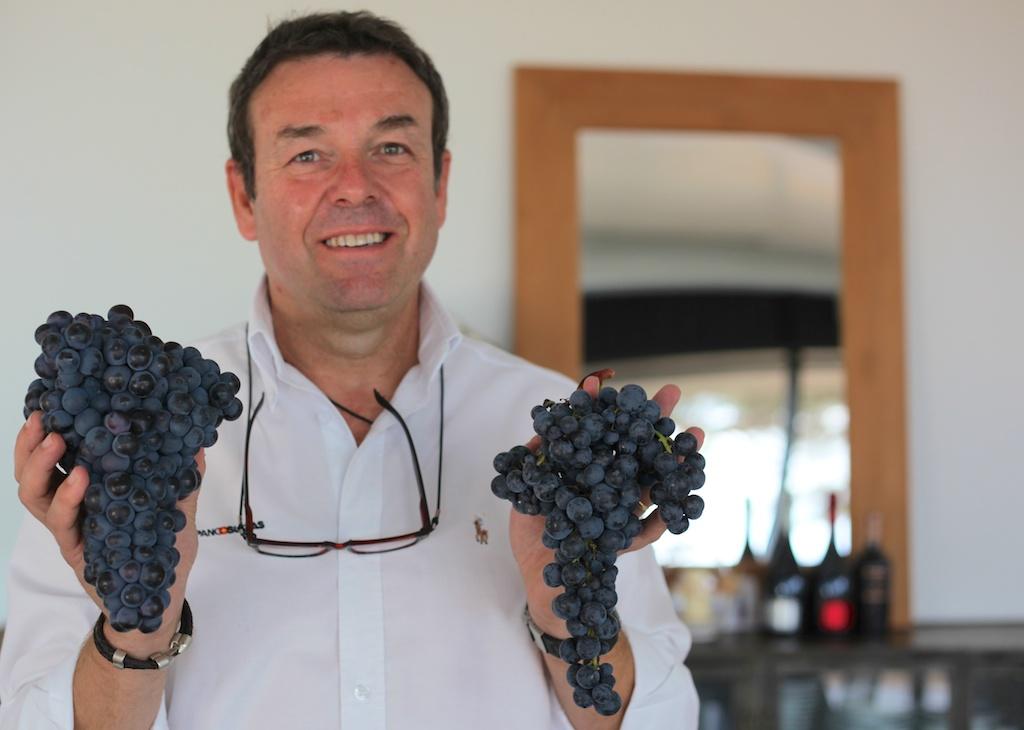 Rafael Navarro nos muestra a la izquierda el racimo de bobal común, y a la derecha el que obtienen de sus viñedos.